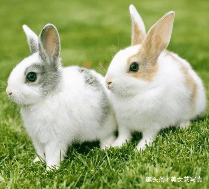 属鼠的和兔能在一起吗:属兔和属鼠可以在一起吗