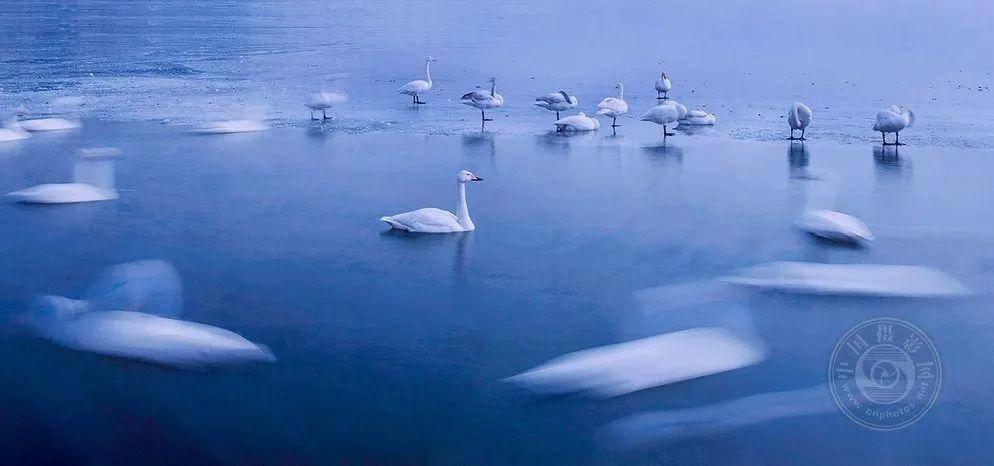 镜外随笔|廖昭同:慢门拍摄八大要领之艺鸟篇