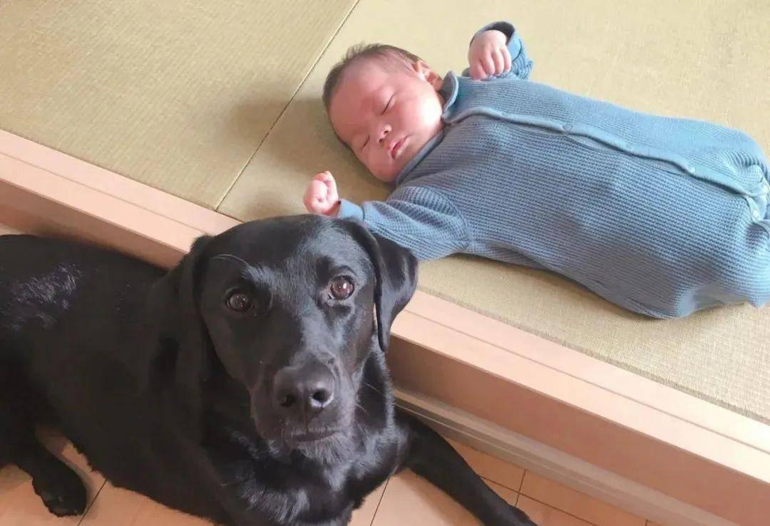 """狗子对人类幼崽太过宠溺,铲屎官:""""这到底是谁的娃啊?!"""""""