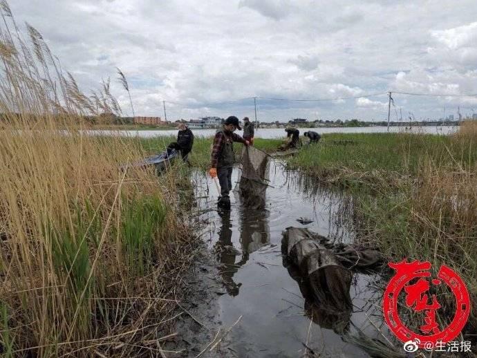 1天清理违规渔具140多个 一只放生鳄龟被解救