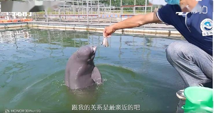 权威媒体发声!新京报携手荣耀30系列呼吁用长焦守护地球的朋友