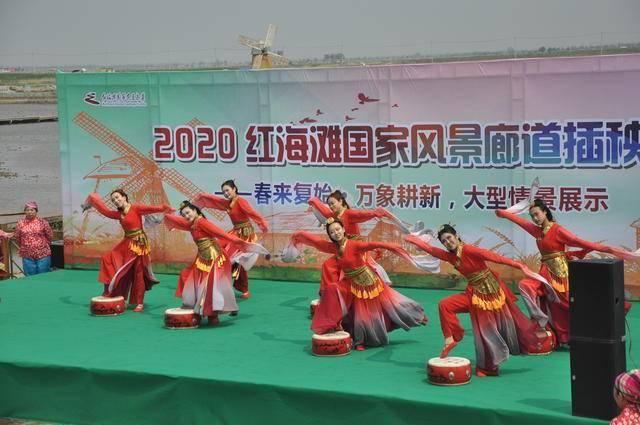 近距离体验农耕文化!2020红海滩插秧节启幕