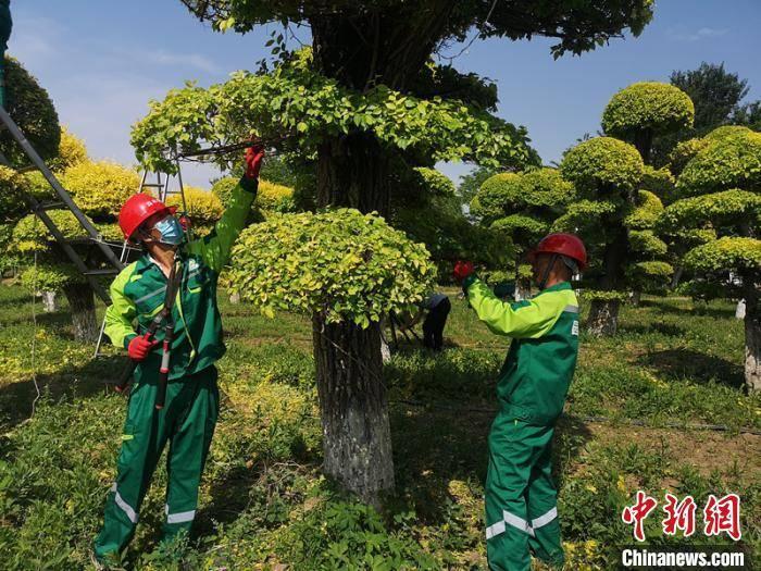 """北京园林绿化行业工装公布""""绿色浪潮风潮""""设计主题"""