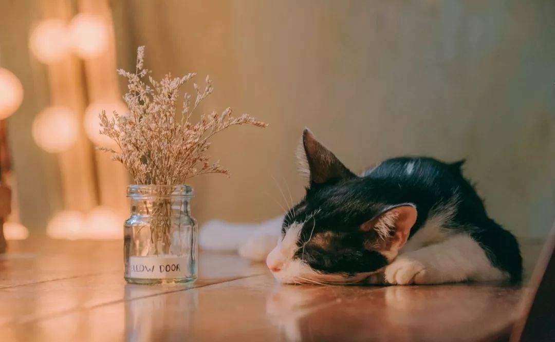好看的田园猫照片