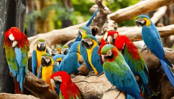 世上有4种稀有的蓝色金刚鹦鹉 简直太美丽了!