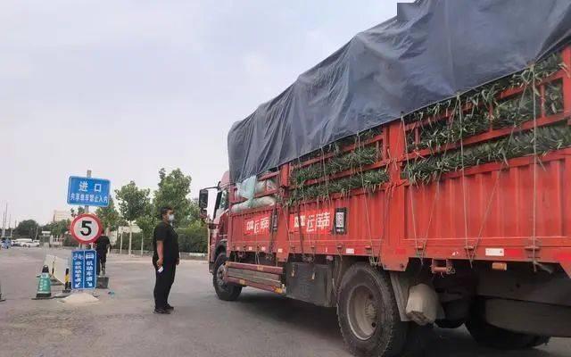 北京新发地市场关停,现场临时蔬菜交易区有运输车开进来交易