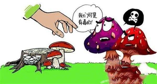 别吃了!野生蘑菇味道虽美,却是伤人利器!