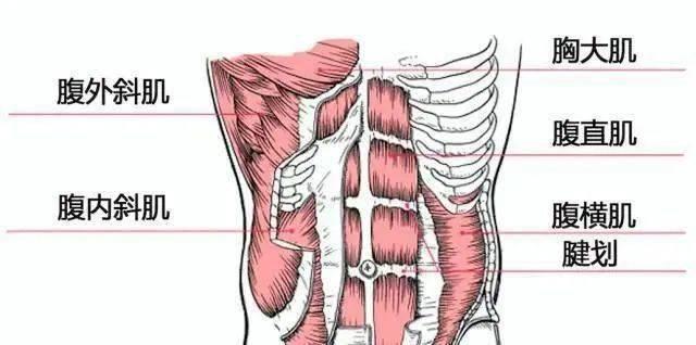 3个动作虐遍腹部脂肪,快速瘦肚子_体式 知识百科 第1张