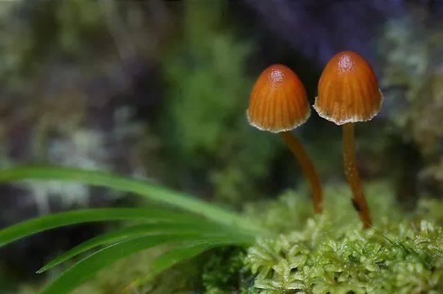 他一生专注拍蘑菇,拍的蘑菇99%你没见过,纪录片之王BBC都为之惊艳!