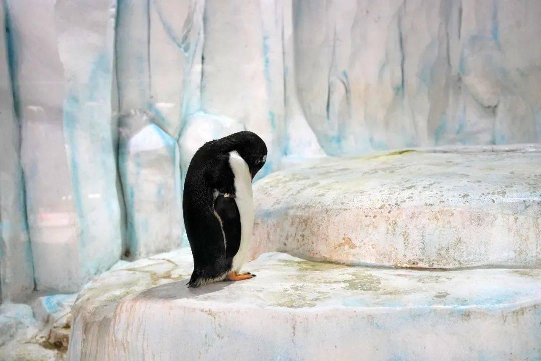 翻船的企鹅憨憨,乘风破浪的老干妈