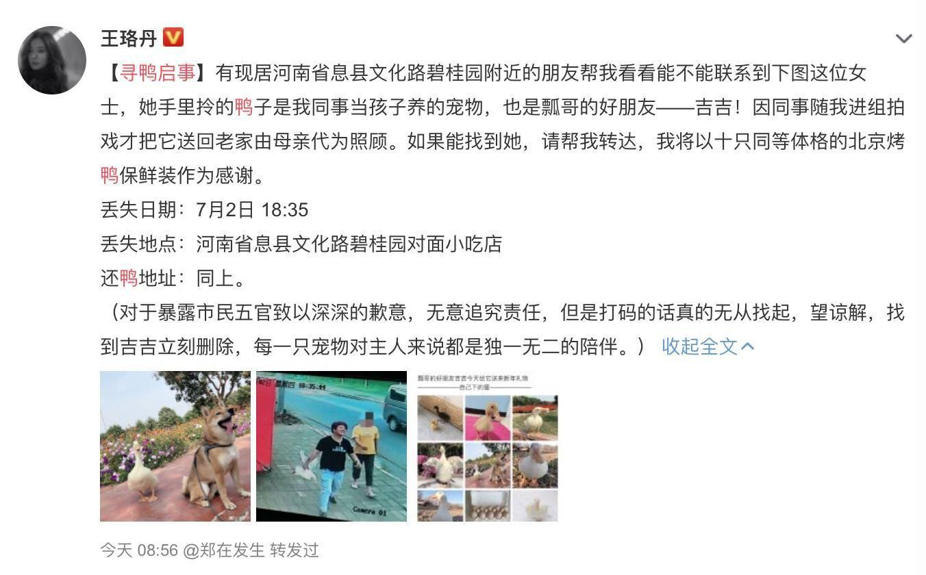 王珞丹称同事宠物鸭被人抓走宰杀,警方:或涉盗窃