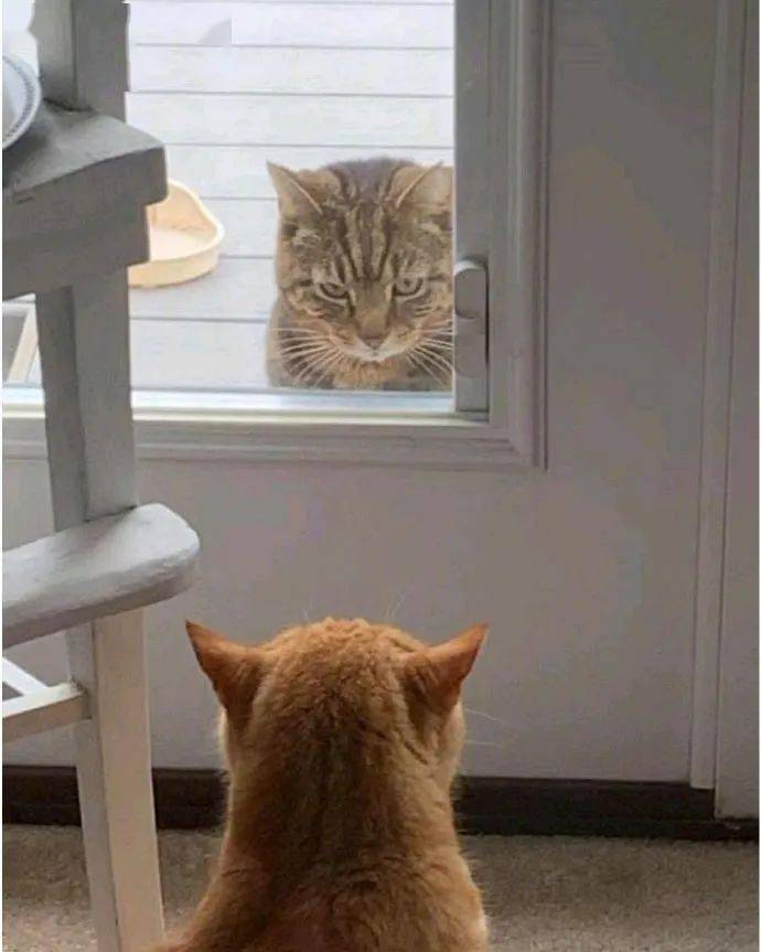 家里突然长出猫咪是种什么体验?世上还有这等好事!