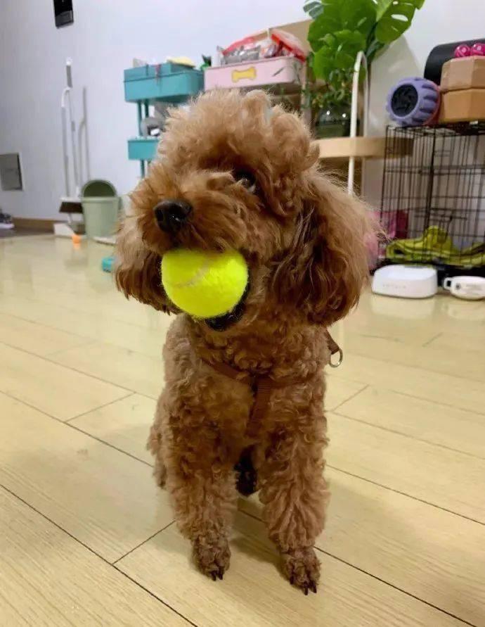 狗狗玩球竟然堵住下水口?铲屎官欲哭无泪,这狗我不要了!