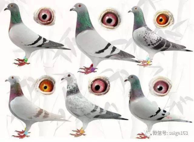 http://p5.itc.cn/q_70/images03/20200724/325c0f99c2654c49a43f0995031710e4.jpeg