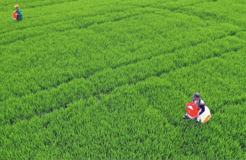 农业板块逆势上扬,多种植股冲击涨停,它们上半年业绩如何?