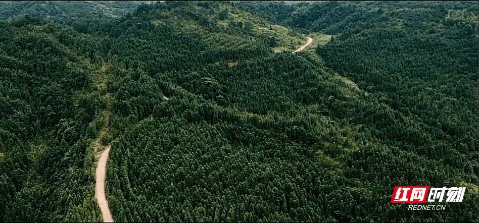 浏阳父子6年种十几万棵树 荒山野岭变成金山银山