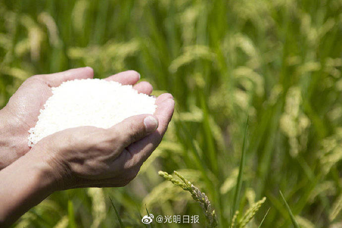 珍惜食物 不浪费食物 确保中国的食