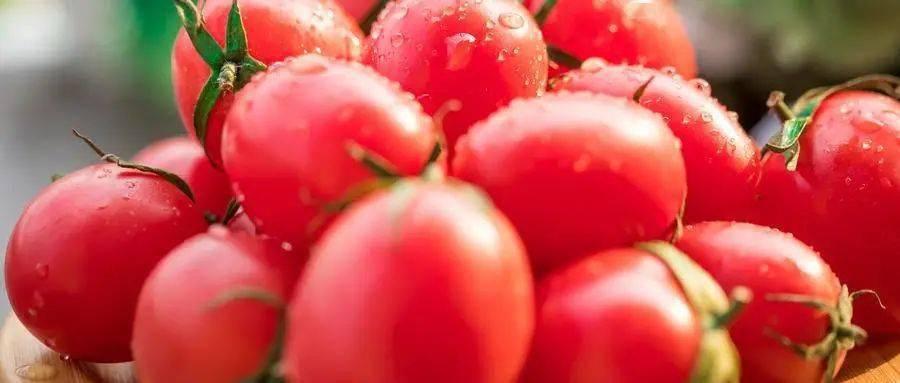 """""""番茄""""生吃好还是熟吃好?大的好还是小的好?"""