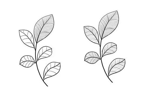 植物花卉简笔画