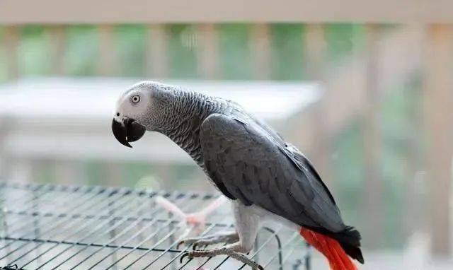 杨浦市民捡到一只会说话的鸟 野保人员: