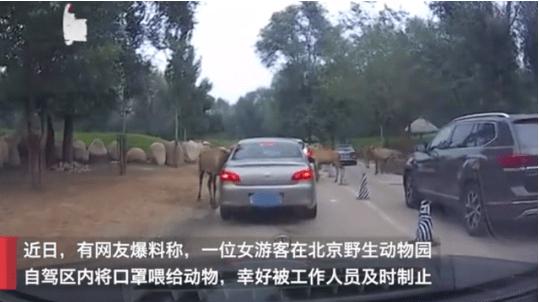 北京大兴野生动物园猛兽咬死游客