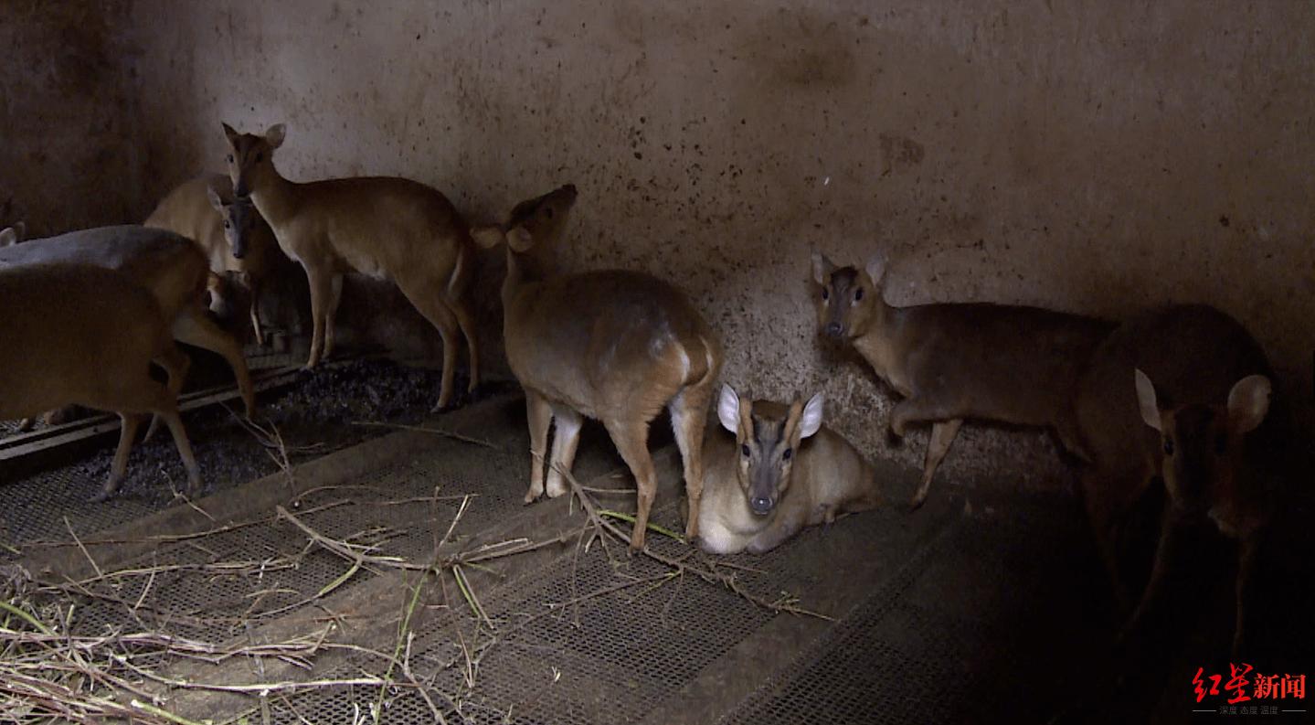 血色山谷:瀕危動物上餐桌 一起命案牽出買賣野生動物大案,獵戶收購商食客37人獲刑