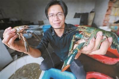 田海波:让澳洲小青龙落户稻田