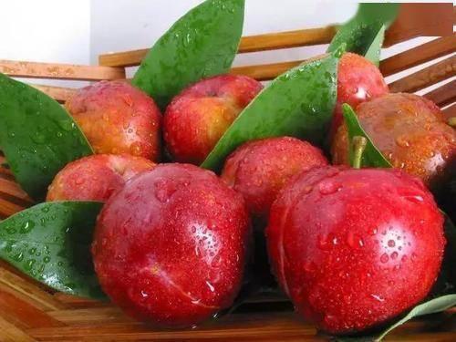 每次胃病发作、反酸,都应该吃馒头?远离酸性水果是对是错?