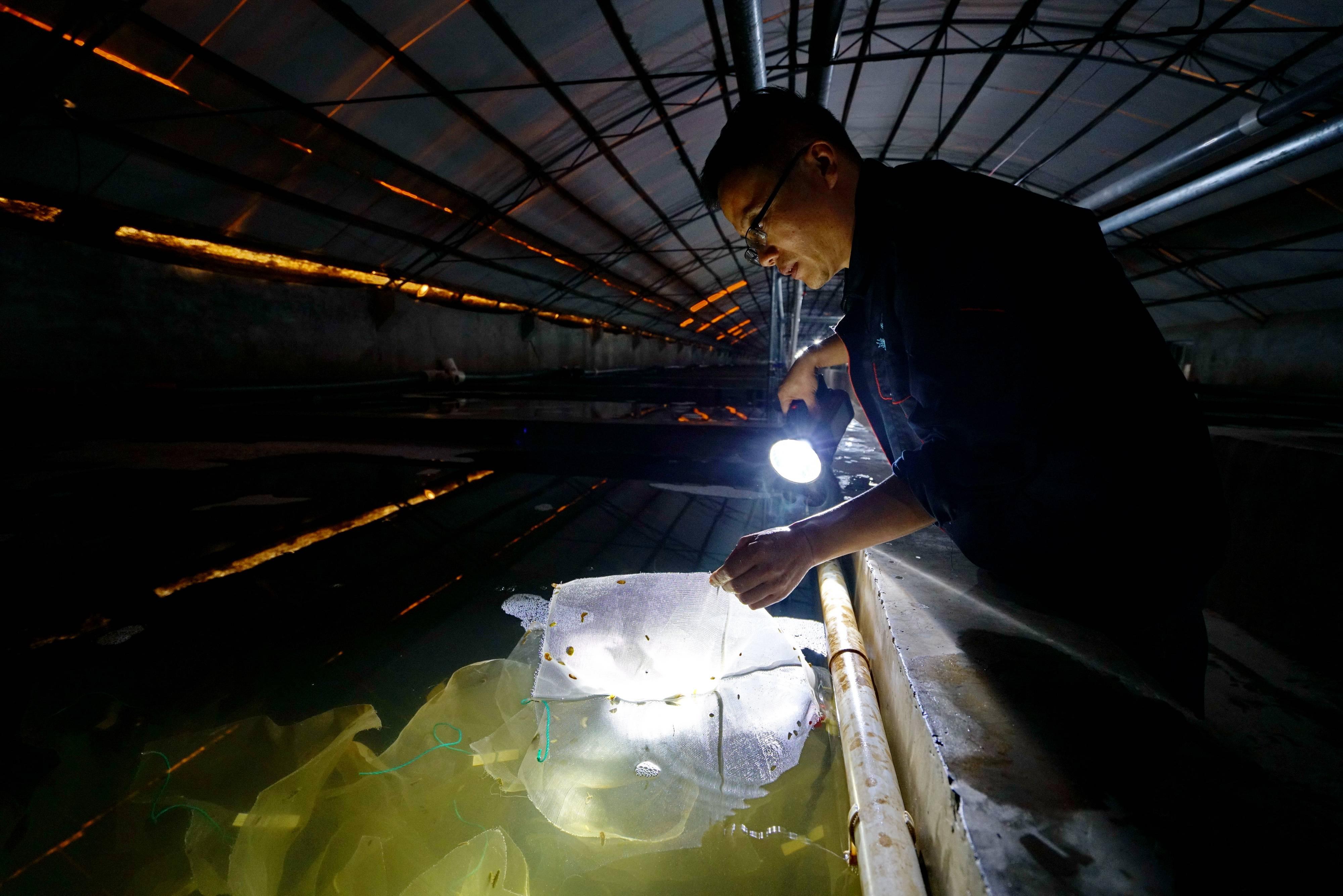 河北滦南:工厂化水产养殖助增收