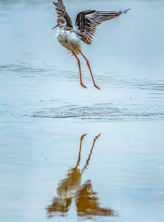 美图 | 重庆南川迎来迁徙候鸟 姿态曼妙宛如精灵