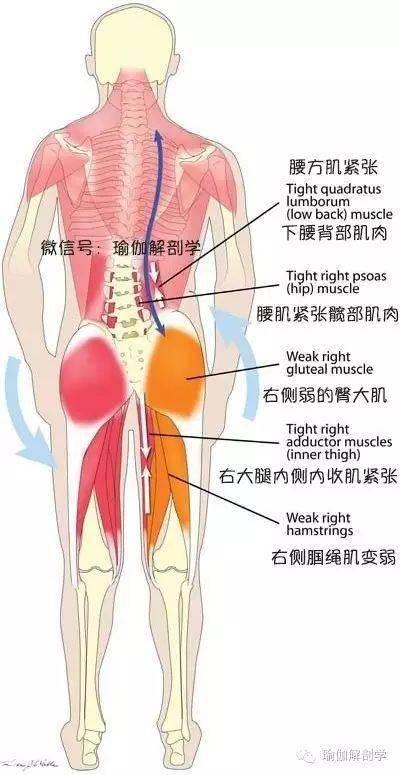 80%的腰痛都与腰方肌有关!练瑜伽,如何放松和加强腰方肌?_右脚