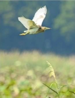"""武汉观鸟会启动 61个鸟类监测点""""盯鸟"""""""