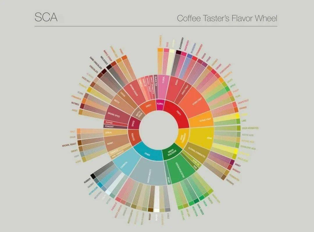 如何更了解咖啡风味? 防坑必看 第5张