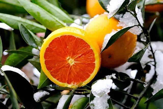 一口爆汁!香甜又多汁的赣南血橙,一年就等这一季!