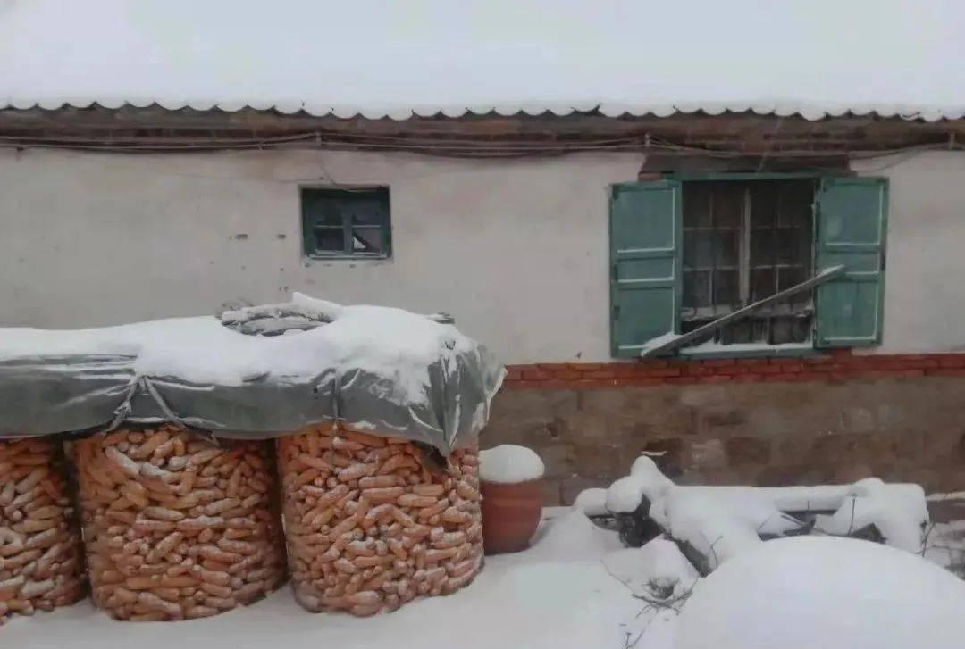 鼠年最后一场雪对明年收成有何影响?老农说:牛遇寡年,米面生虫  第2张