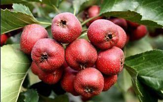 九种水果排毒最快!