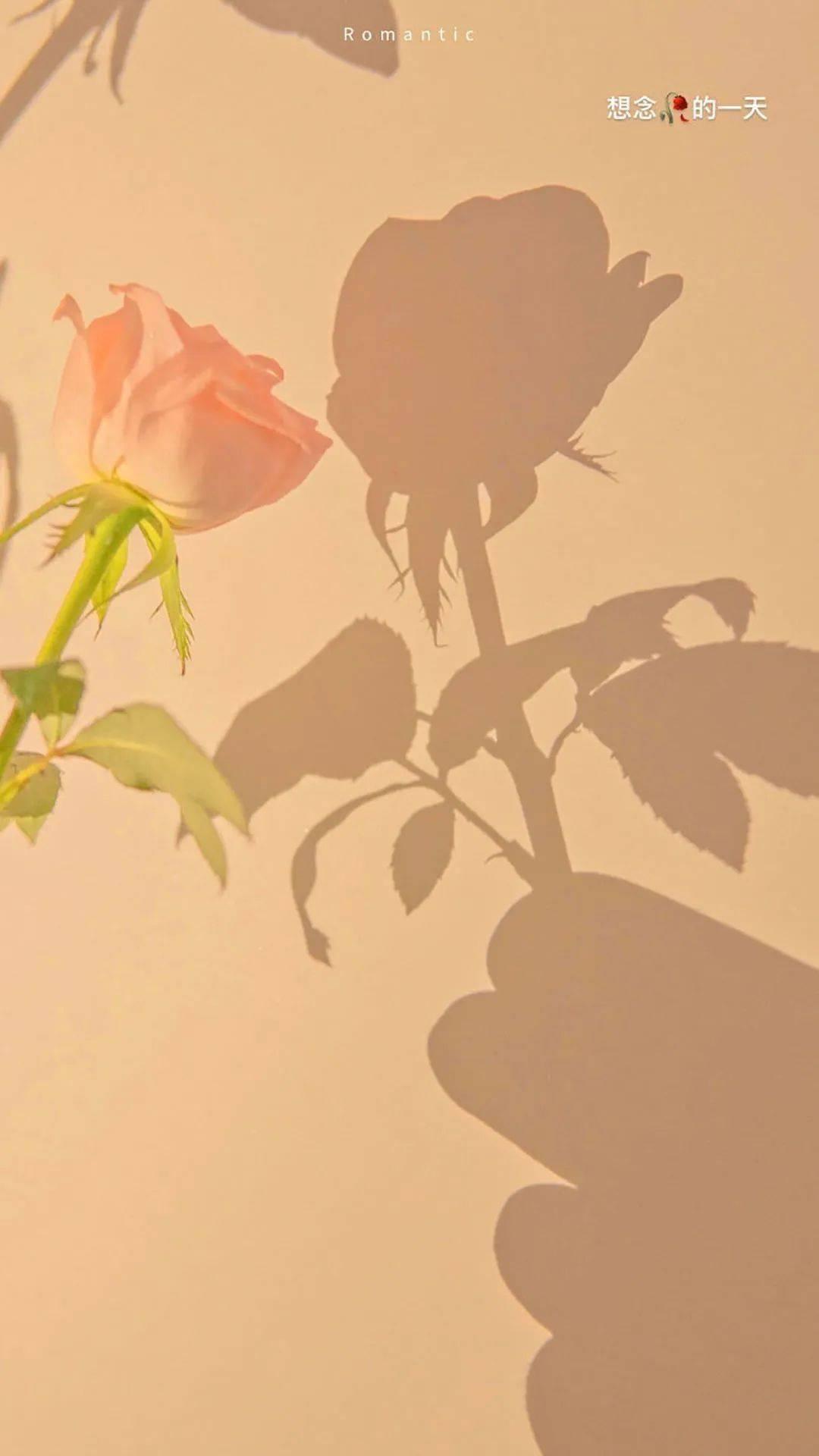 【壁纸】好像风够温柔, 阳光够暖和 ,一切都美, 和你一样