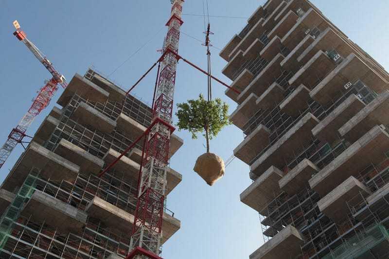 是在楼房上种树,还是在树旁修楼房?