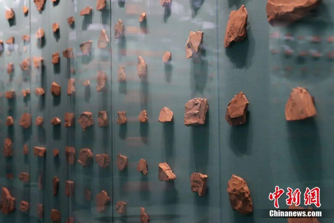澄江|什么?人类的祖先竟然是……