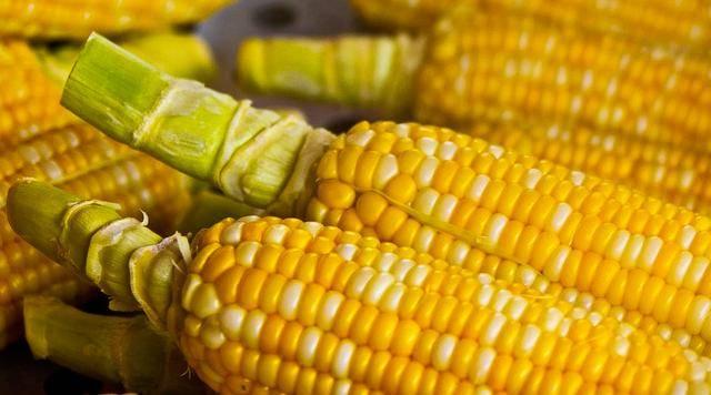 早间玉米行情速览!附一次性储备拍卖结果