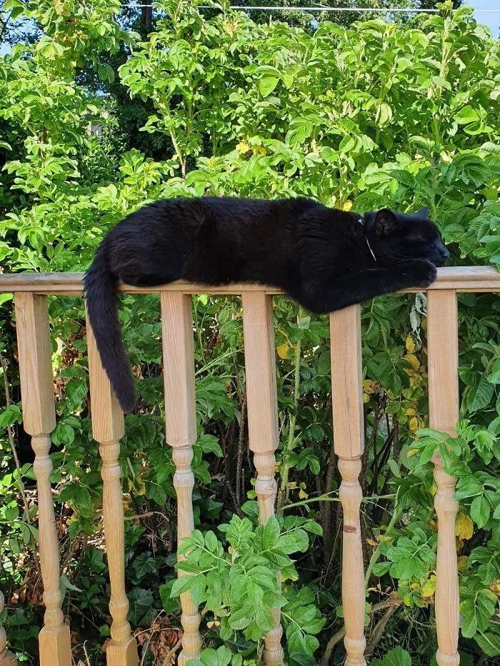 """论坛上,有网友说想看""""猫猫最可爱的照片"""""""