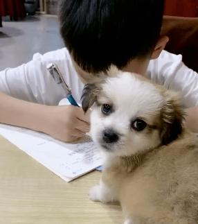 老师!我的暑假作业被狗吃了……