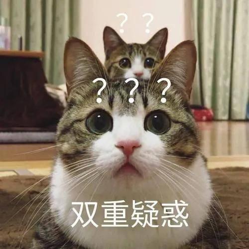 养猫的人,几乎都遇到找不到猫的时候,蓦然回首……