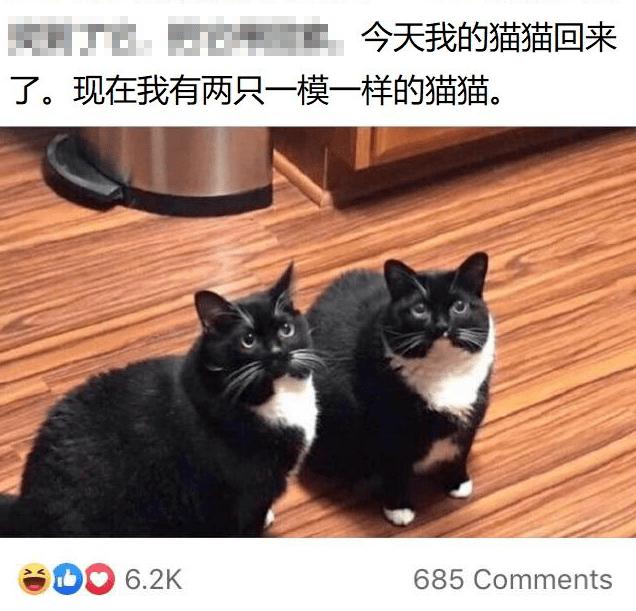两只暹罗竟逼疯了8万网友,吸猫就吸猫,咋都出现幻觉了呢?