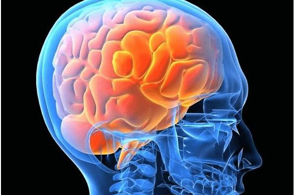 大脑的能耗不低于65%,这就是为什么婴儿需要频繁进食