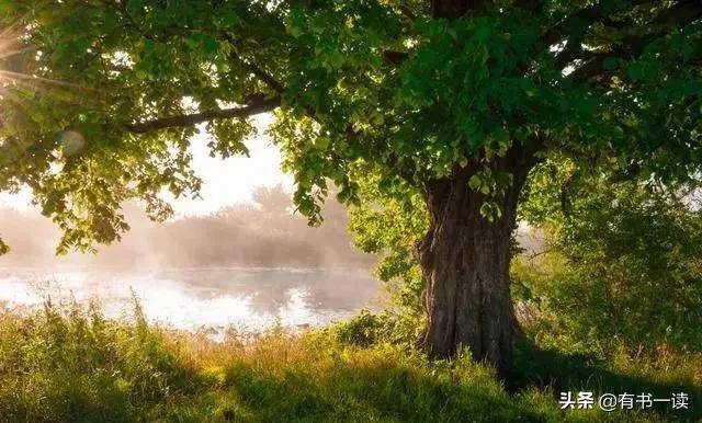 致橡树原文解析(总结致橡树爱情观)