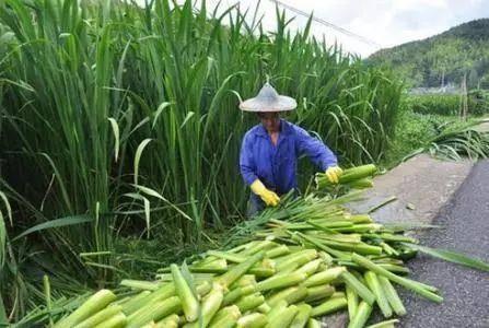 适合懒人种植的经济作物,最适合懒人种植的六种菜