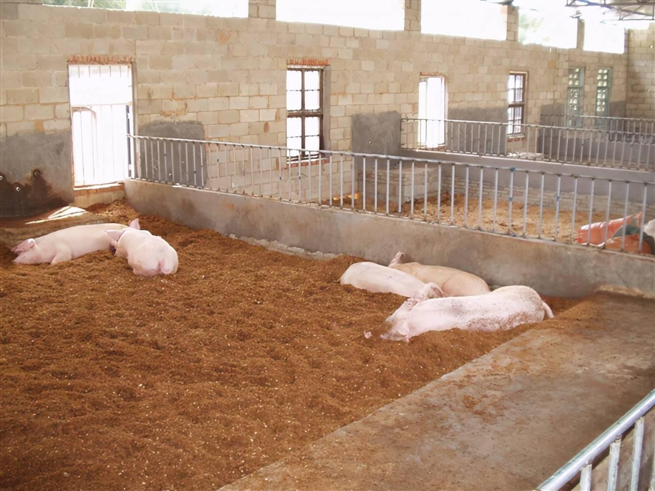 一头猪多少钱(养一头猪划算吗)插图