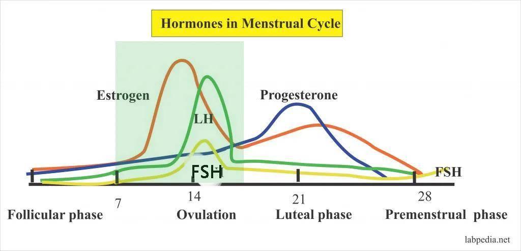 妊娠 黄体 機能 不全