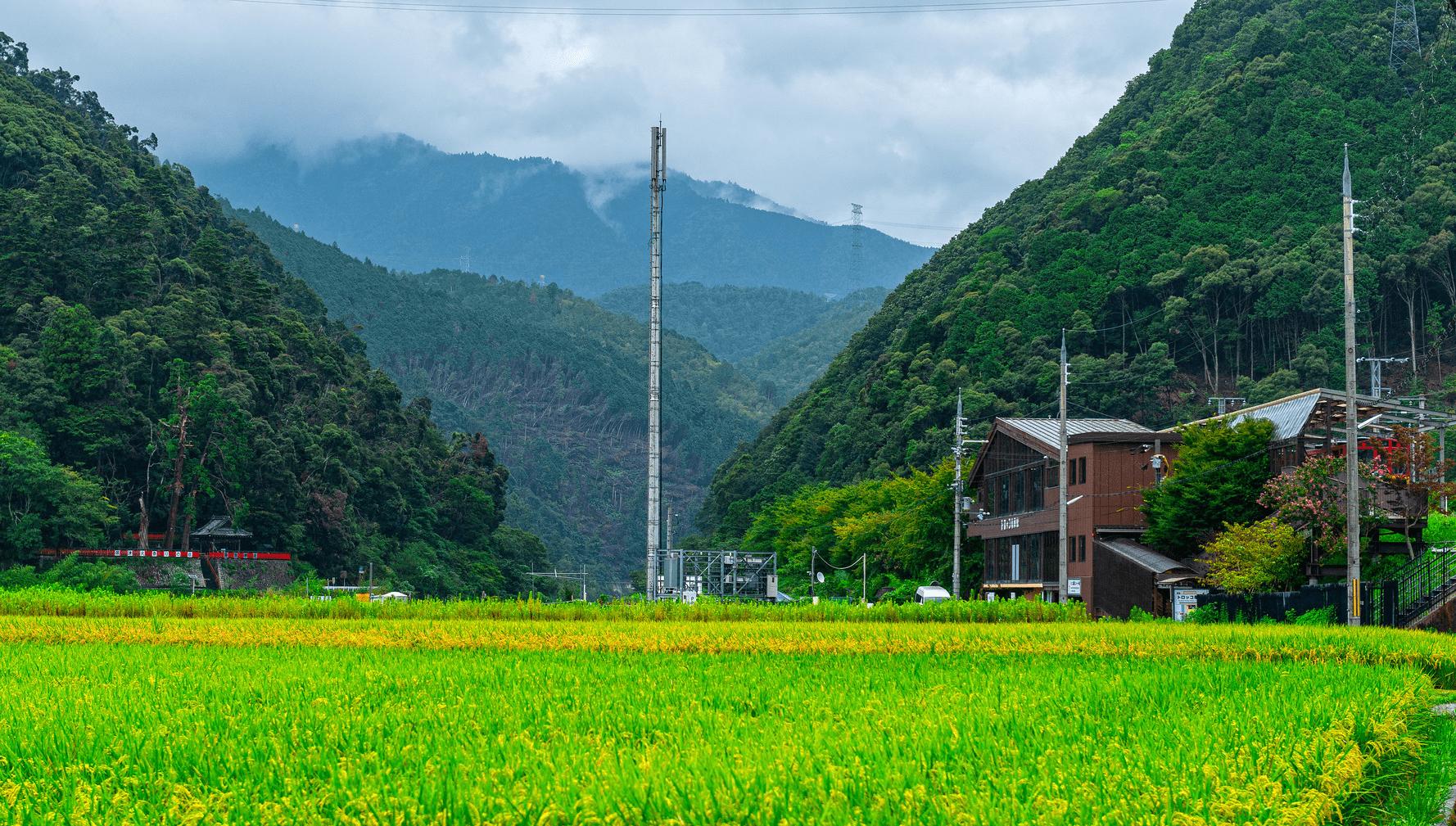 孤独的日本农村:废弃的无主房屋越来越多,欲靠旅游业留下年轻人